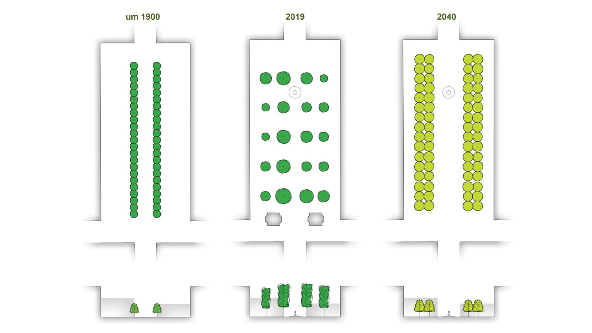 2020 würde der Neumarkt nach Plänen von Mann Landschaftsarchitektur so aussehen. Die Platanen blieben erst einmal erhalten. Neue Baumreihen würden gepflanzt. Bis 2040 würden die Platanen komplett verschwinden. Grafik: Mann Landschaftsarchitektur. © Stadt Limburg